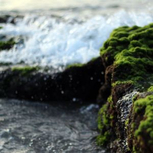 Algae and Oceanwater scent oil