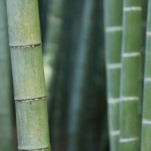 Bamboo scent oil