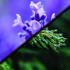 Lavender / Pine essential oil